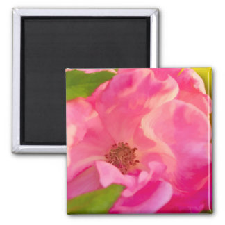 Painterly Abstract Pink Knockout Rose Magnet