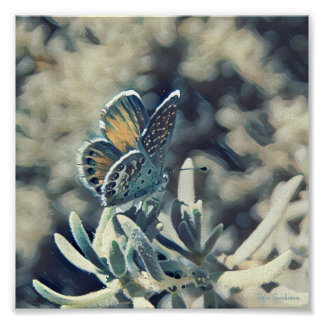 Painterly Blue Butterfly 7x7 Canvas Poster Print