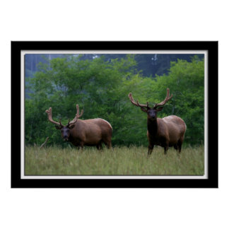 Painterly Elk Photo Poster