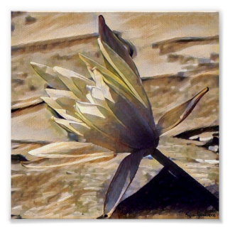 Painterly Waterlily 7x7 Canvas Poster Print
