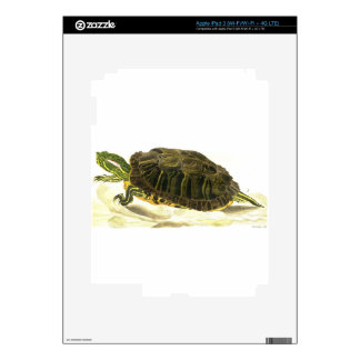 Painting of Trachemys scripta elegans (Wied) Decal For iPad 3