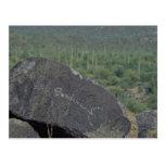 Paintings On Rocks Postcard