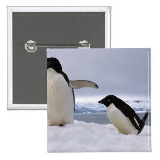 Pair Adelie penguins Antarctica Pins