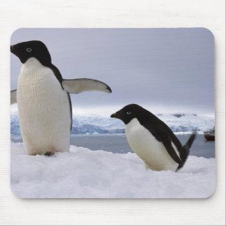 Pair Adelie penguins Antarctica Mouse Pad