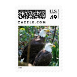 Pair Bald Eagles Postage Stamps Postage Stamps