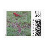 Pair Cardinals Postage Stamps Stamps