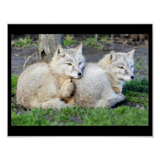 Pair couple fox love poster