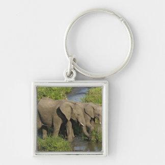 Pair of African Elephants feeding, Masai Mara, Keychain