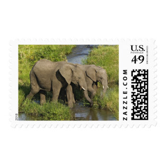 Pair of African Elephants feeding, Masai Mara, Postage Stamp