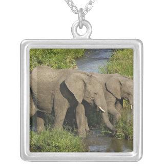 Pair of African Elephants feeding, Masai Mara, Square Pendant Necklace