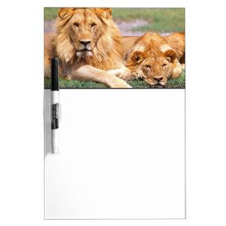 Pair of African Lions, Panthera leo, Tanzania Dry-Erase Board