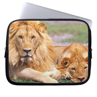 Pair of African Lions, Panthera leo, Tanzania Laptop Sleeve