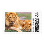 Pair of African Lions, Panthera leo, Tanzania Postage Stamp