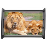 Pair of African Lions, Panthera leo, Tanzania Serving Tray