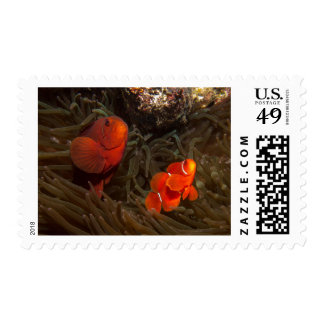 Pair of Anemone Fish Postage Stamps
