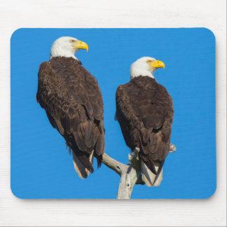 Pair of Bald eagles, Haliaeetus Leucocephalus Mouse Pad