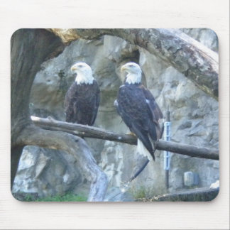 Pair of Bald Eagles Mouse Pad