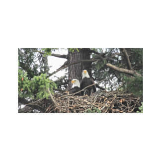 Pair of Bald Eagles protecting the nest Canvas Print
