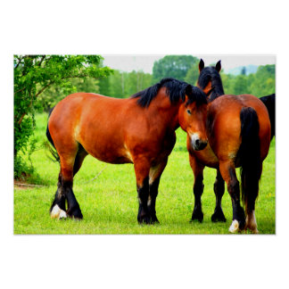 Pair Of Bay Polish Bred Horses | Green Landscape Poster