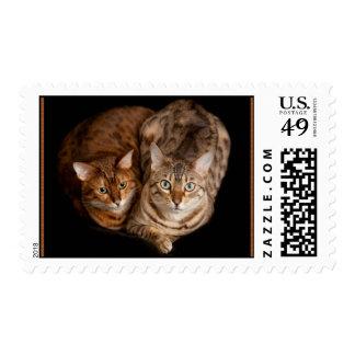 Pair of Bengal Kittens Postage Stamp