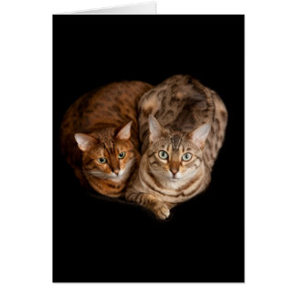 Pair of bengal kittens stationery note card