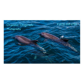 Pair of Bottlenose Dolphins Business Card Template