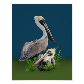 Pair of Brown Pelicans, Customizable Poster