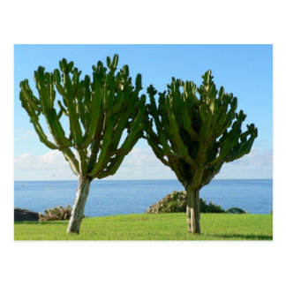 Pair Of Cactuses Post Card