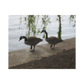 Pair of Canada Geese Strolling Canvas Print