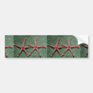 Pair of candy cane starfish from Palau Car Bumper Sticker