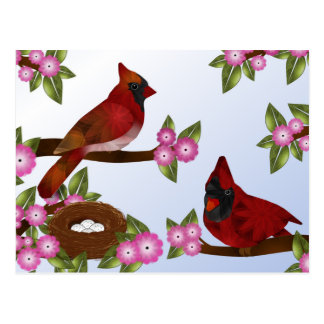 Pair of Cardinals and Nest Postcard