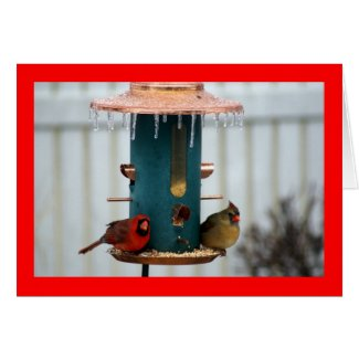 Pair of Cardinals at Icy BirdFeeder Card