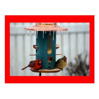 Pair of Cardinals at Icy BirdFeeder Postcard