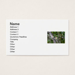 Pair of Cedar Waxwings Business Card