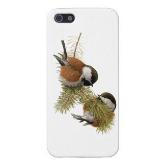 Pair of Chestnut-backed Chickadee on Pine Tree Case For iPhone SE/5/5s