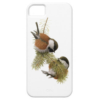 Pair of Chestnut-backed Chickadee on Pine Tree iPhone SE/5/5s Case