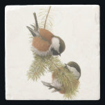 "Pair of Chestnut-backed Chickadee on Pine Tree Stone Coaster<br><div class=""desc"">Two Chestnut-backed Chickadees share a branch in a pine tree,  chromolithograph after painting (watercolor) by Louis Agassiz Fuertes</div>"