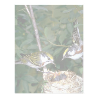 Pair of Chestnut-sided Warblers with nest Letterhead