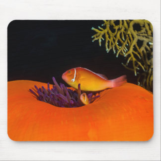 Pair of Clownfish Great Barrier Reef Coral Sea Mouse Pad