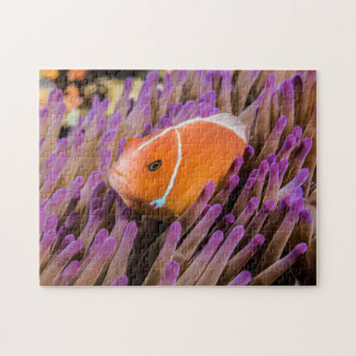 Pair of Clownfish Jigsaw Puzzle