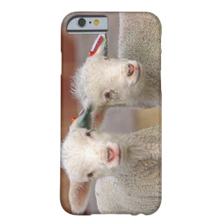 Pair of commercial Targhee Lambs Barely There iPhone 6 Case