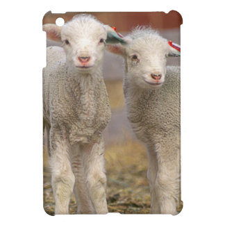 Pair of commercial Targhee Lambs Cover For The iPad Mini