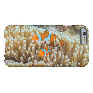 Pair of Cute Clownfish on the Great Barrier Reef Barely There iPhone 6 Case