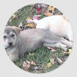 Pair Of Cute Puppies Laying On The Green Grass. Stickers