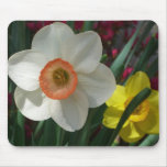 Pair of Daffodils Pink and Yellow Spring Flowers Mouse Pad