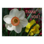 Pair of Daffodils Thank You Blank Card