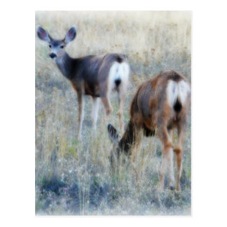 Pair of Deer in Grassy Field Postcard