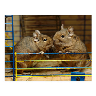 Pair of Degus at the Cage Door Postcard