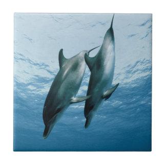 Pair of Dolphins Ceramic Tile