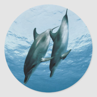 Pair of Dolphins Classic Round Sticker